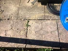Freecycle Paving slabbs