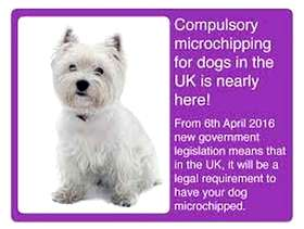 Freecycle FREE microchipping Hove or within 10 miles