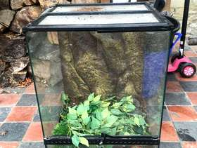 Freecycle Terrarium