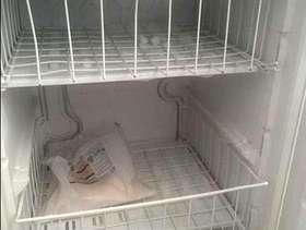 Freecycle Zanuzzi undercounter freezer