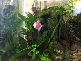 Freecycle Free Fish (and tank)