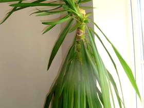 Freecycle Indoor Plant