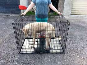 Freecycle Large dog cage.