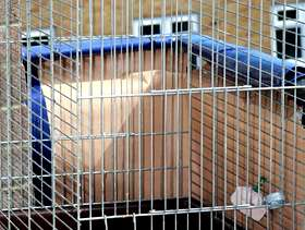Freecycle Medium bird cage and accessories