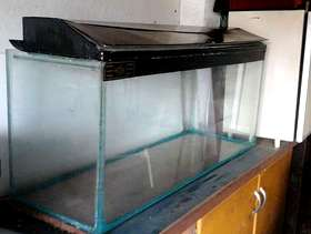 Freecycle Glass fish tank