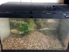 Freecycle Fish tank