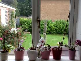 Freecycle Orchids