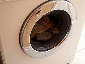 Freecycle Miele washer
