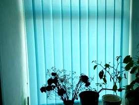 Freecycle Window blinds