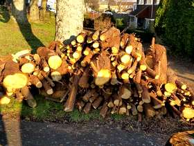 Freecycle Unseasoned logs