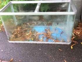Freecycle Glass Aquarium